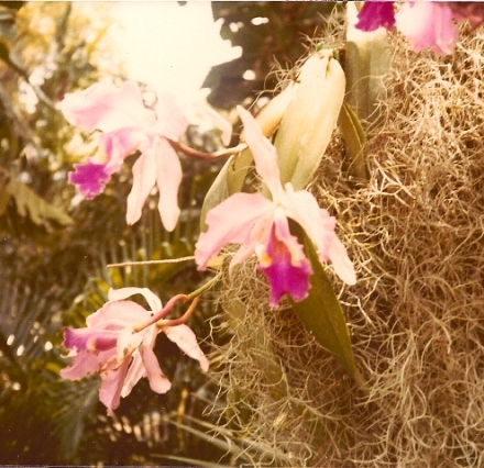 Orchids growing in Cypress Gardens
