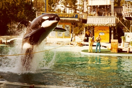 Shamu - at least, one of them.